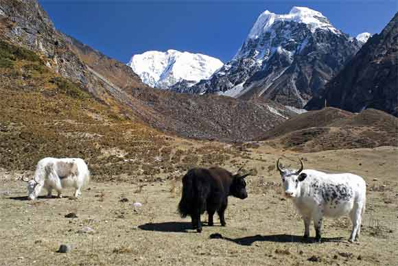 What are things you can do at Langtang Valley Trekking