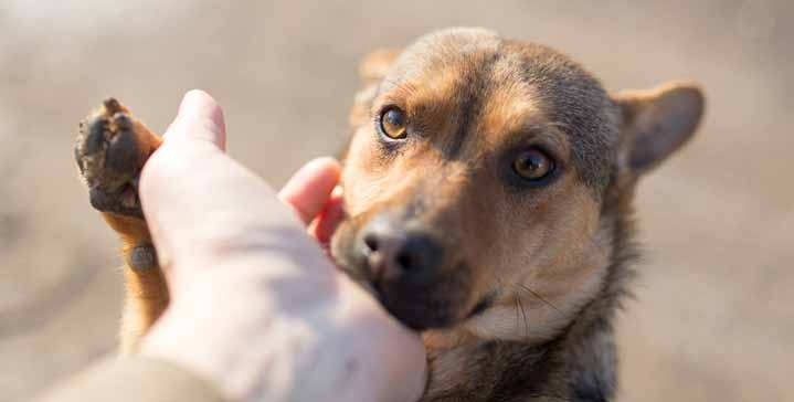 How To Help A Rescue Dog With Separation Anxiety