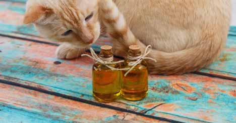 The CBD Oil for Animals