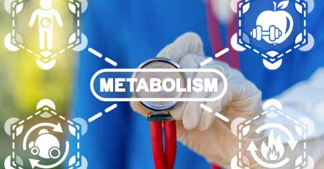 How Metabolism Converts Food Into Energy